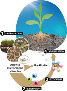 HumiPlus de Timac Agro accélère la décomposition des matières organiques