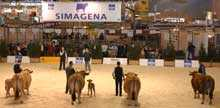 Simagena et Sia 2005: deux palais pour l'élevage